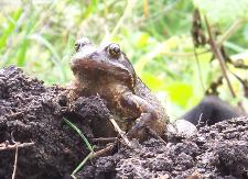 my friend frog